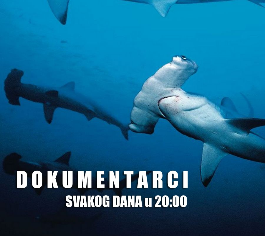 SHARKS promo 001